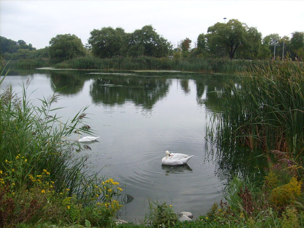 Swansea Village High Park Grenadier Pond west end Toronto real estate