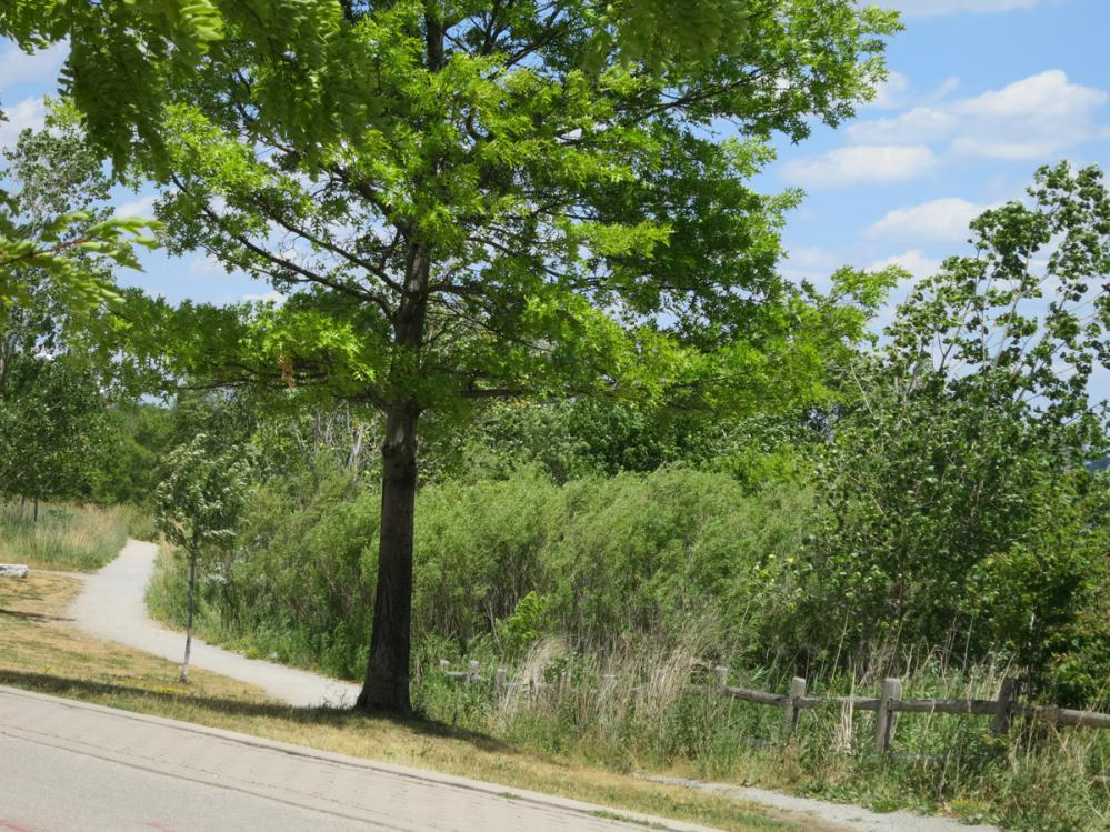 Humber Bay Shores trails, paths, Lake Ontario west Toronto real estate